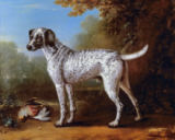 John Wootton - Grey spotted hound, 1738