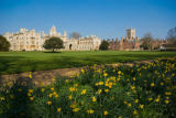 Bowman (F1 Online) - Cambridge University, Cambridge, Cambridgeshire, Narzisse