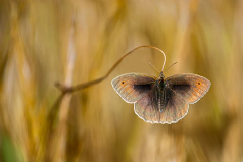 Foto-Kunstdruck: Luigi Chiriaco, Wings of grass