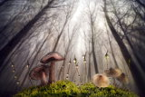 Small and giant creatures of the woods von Alberto Ghizzi Panizza