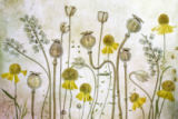 Mandy Disher - Poppies and Helenium