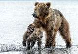 Giuseppe D'Amico - Love and firmness - kamchatka, Russia