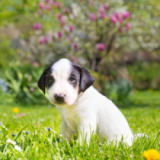 matej kastelic - Mixed-breed cute little puppy on grass.