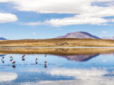 Joerg Hackemann - Laguna Kara salt lake with reflection of the mountain, Eduardo Avaroa Andean Fauna National Reserve